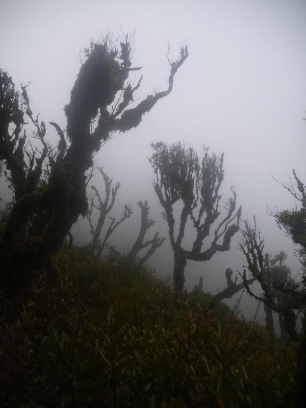 Ghoblin forest
