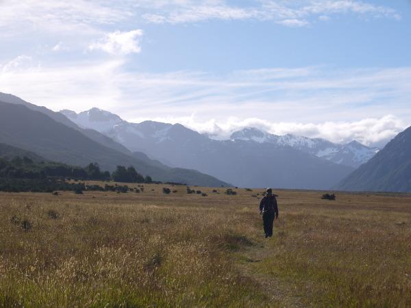 Waimak river track grassy flats
